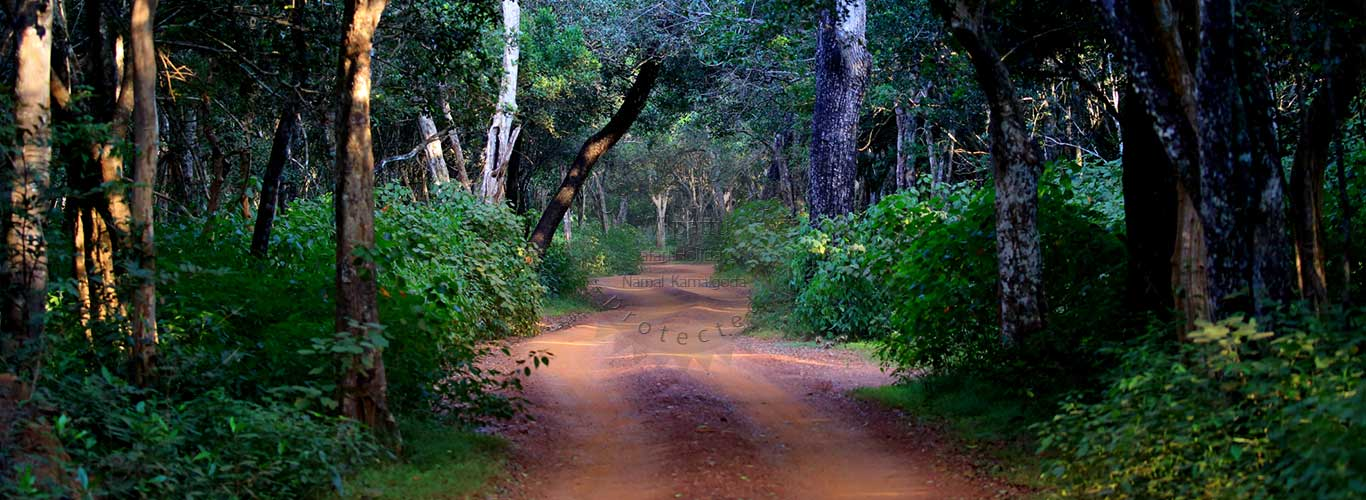 Wilpattu National Park | Wilpattu Safari Camp | Wilpattu Safari Jeeps | camping in wilpattu